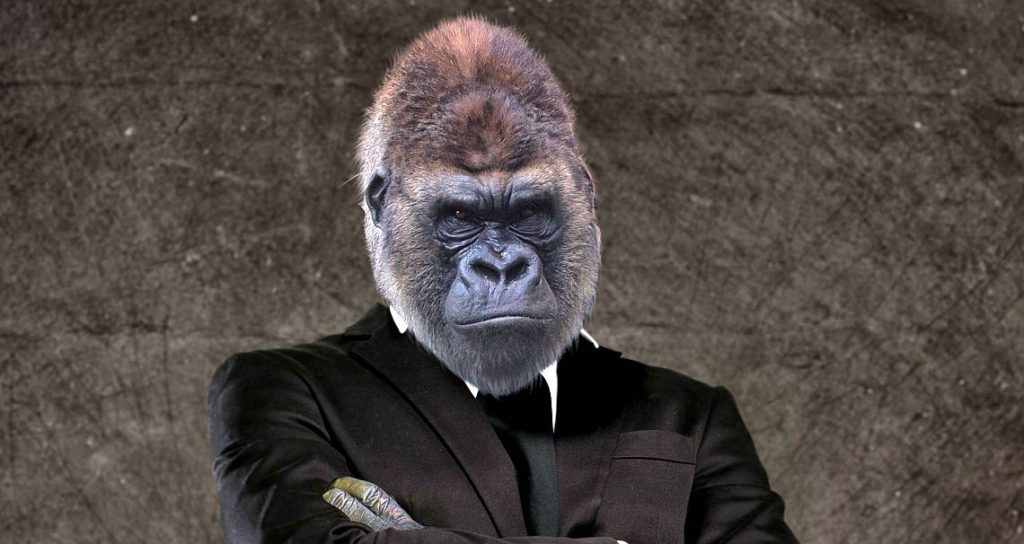Bild Gorilla Evolutionäres Führungsmodell